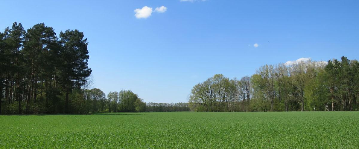 Landschaft in der Nähe des Lotschesee